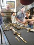 Le squelette de l'Homme de la Chapelle-aux-Saints
